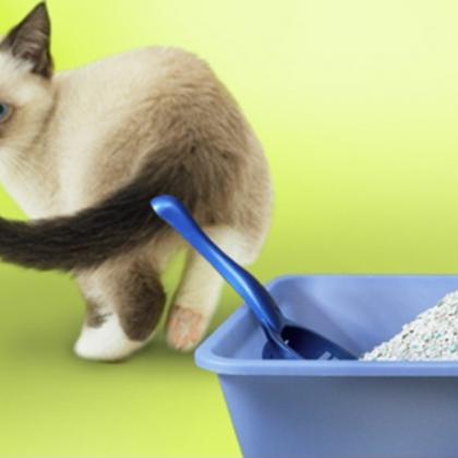 Как отучить котов гадить где попало